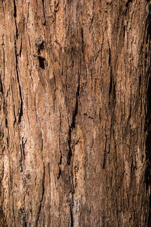big pine wood bark texture