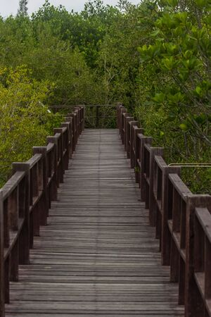 beautiful view is mangove and wooden bridge natural background