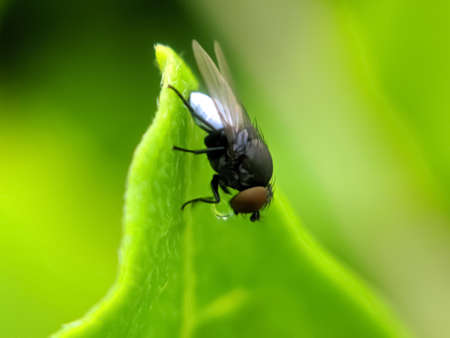 green leaves plant to sit housefly garden housefly