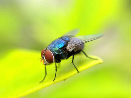 green leaves plant to sit housefly garden housefly Banco de Imagens