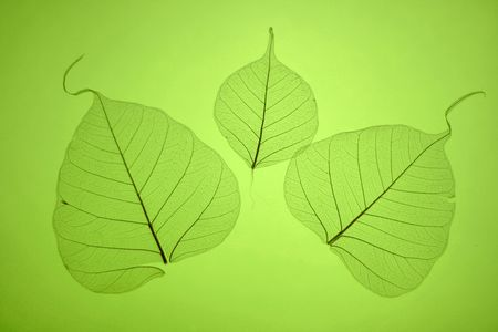 Grean leaves texture, ornate organic background Stock Photo - 2488479