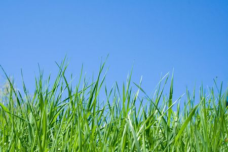 green grass and blue sky Stock Photo - 3344023