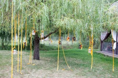 decor tree for the wedding ceremony photo