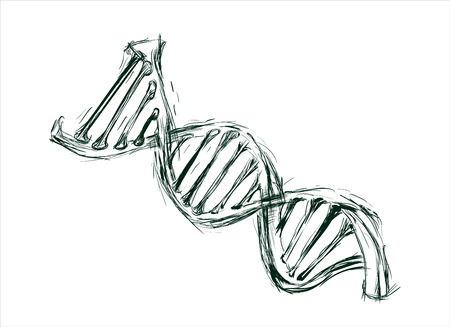 hand sketch the structure of DNA