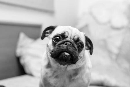 dog portrait, black and white photo