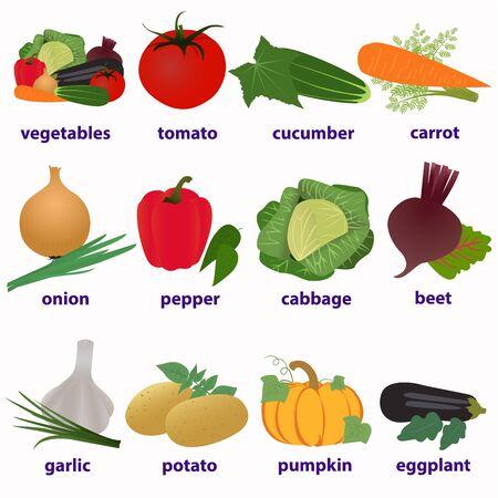 assortment of vegetables,  vector illustration