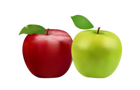 closeup drawn red and green apples, healthy fruits, vector illustration