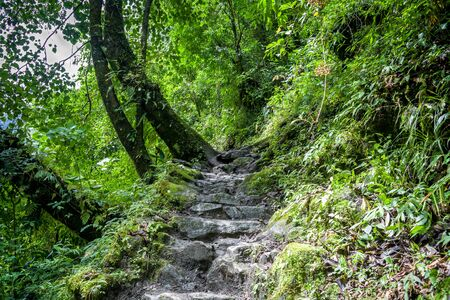 A beautiful trail through lush green forest of Kanchenjunga National Park.