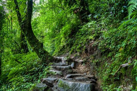 A picturesque forest path through Kanchenjunga National Park on our first day of the famous Goechala Trek
