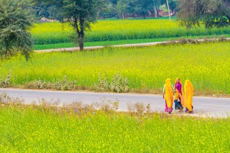 abhaneri: Abhaneri, India, 21st January 2017 - Three women walk on a road past mustard fields in Abhaneri, Rajasthan, India.