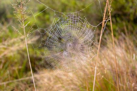 Photograph of a spider web in Horton Plains National park, Sri lanka