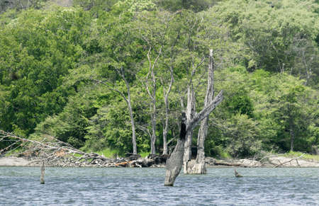 Large natural reservoir and the dead trees standing idle in the middle of the waters. tropical forest in the background.