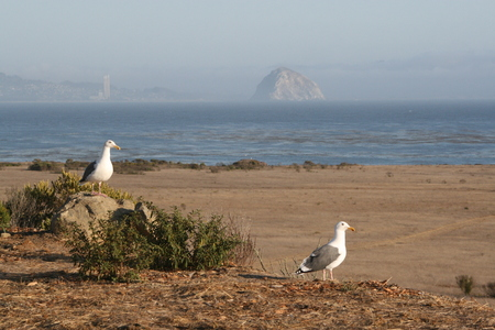 outlaws: Two seagulls on the beach