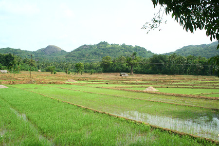 rice mill: ricefield