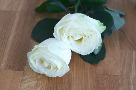 worktops: Two white roses