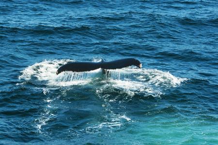 wasser: Fluke vom Wal