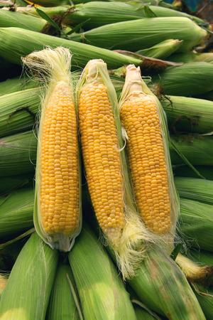 isoliert: Maiskolben Stock Photo