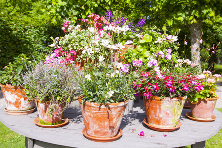 old fashioned vegetables: Vintage flower pots with flowers Stock Photo