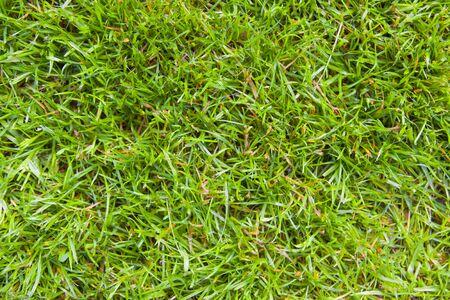 grass blade: green grass