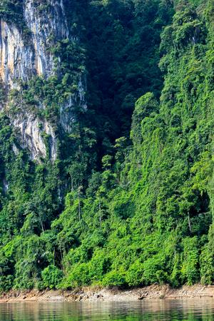 Green forest Fertile