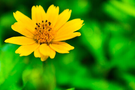 folwer: Yellow Flower Stock Photo
