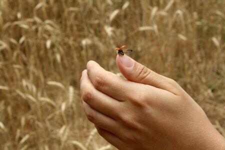 untroubled: lucky hand, ladybug Stock Photo