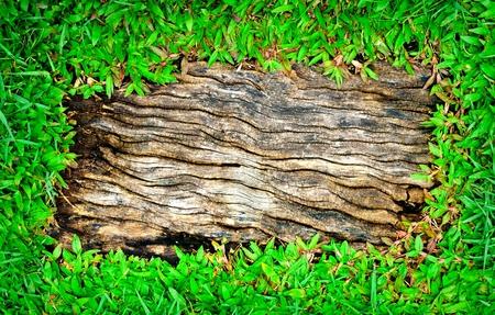 bordered: Green leaves frame