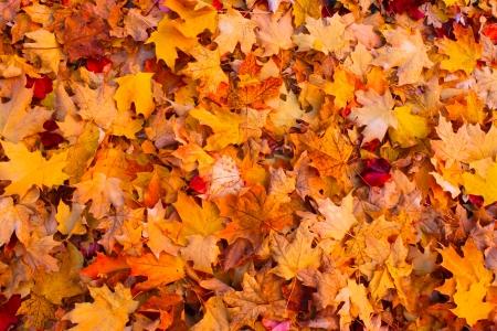 dode bladeren: Droge herfst bladeren achtergrond Stockfoto