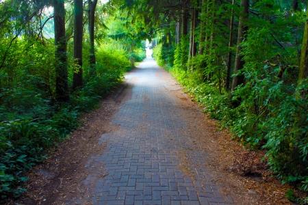 empedrado: Camino en la selva Foto de archivo