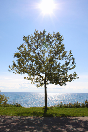 Single tree on the edge of a sparkling blue lake photo