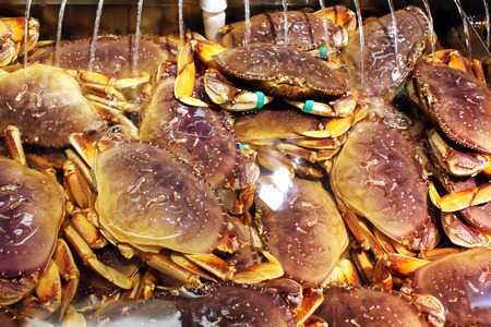 Live Dungeness crabs in a seafood market 스톡 콘텐츠