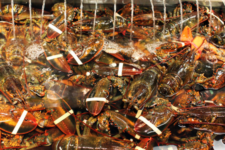 Live Maine lobsters in a seafood market