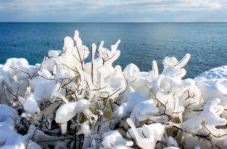 Snow covered frozen bushes along the shore of a lake on a cold winter day 스톡 콘텐츠