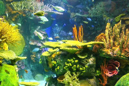 Colorful underwater scene with coral reefs and tropical fish