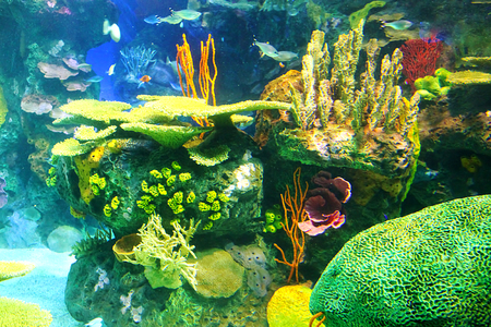 soft coral: Aquarium with colorful coral reefs and plants Stock Photo