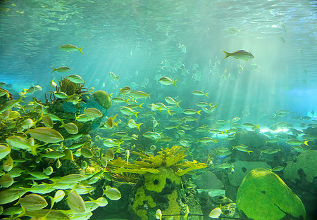 Underwater background with sunrays and fishes