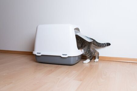 cat entering hooded cat litter box with flap entrance in front of white wall with copy space