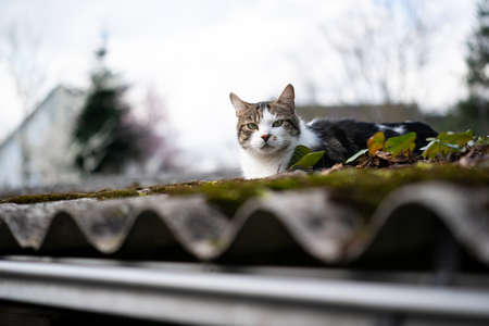 domestic cat resting on rooftop of a shed outdoors in the garden 写真素材 - 150640073