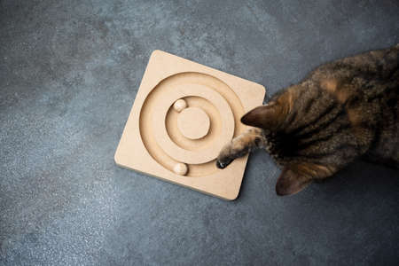 top view of a curious tabby cat playing with wooden cats toy on the floor with copy space 写真素材 - 150645968