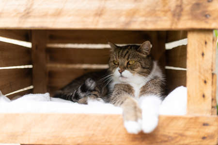 cat relaxing in wooden fruit crate box outdoors on a sunny summer day with paws hanging over the edge looking to the side