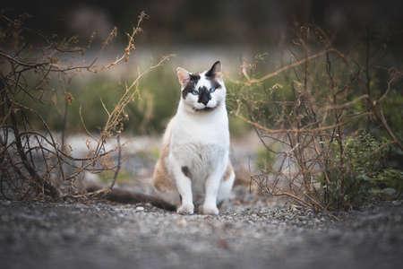 calico stray cat tilting head and looking at camera between bushes