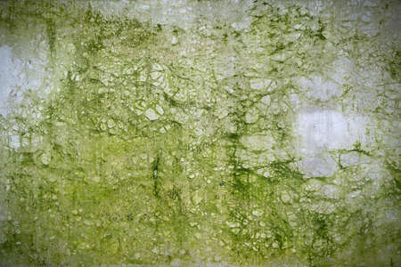 abstract green cracked concrete background texture covered with moss
