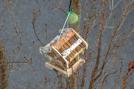 Bird house with feed - aviary at a small tree Banco de Imagens