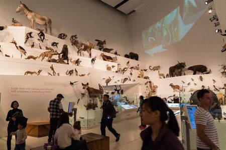 メルボルン, オーストラリア - 2017 年 4 月 30 日: メルボルン博物館、カールトン、ぬいぐるみの幅広いコレクションを含む歴史および自然史博物館で 報道画像