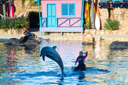 Gold Coast, Australia - July 11, 2017: performing dolphins at Sea World theme park at Surfers Paradise. Editorial