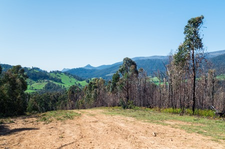 Fire access track through the forest above Marysville in Murrindindi Shire, Victoria, Australia. Stock Photo
