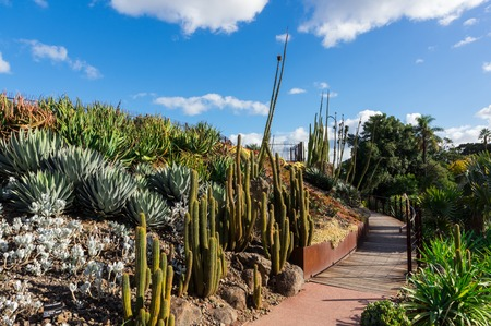 Guilfoyles Volcano in the Royal Botanic Gardens is planted with water plants and succulents.
