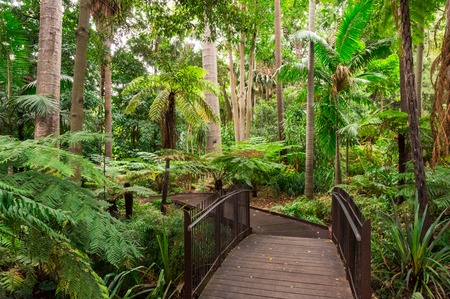 Path through the Fern Gully of the Royal Botanic Gardens in Melbourne. Stock Photo