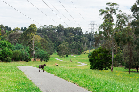 Green Gully Linear Park in Templestowe in the north-eastern suburbs of Melbourne, Australia. Stock Photo