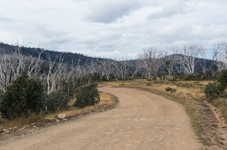 Burnt dead snow gum trees line the Dargo High Plains Road near Mount Hotham in Victoria, Australia.